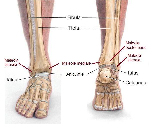 Deteriorarea ligamentelor articulației gleznei