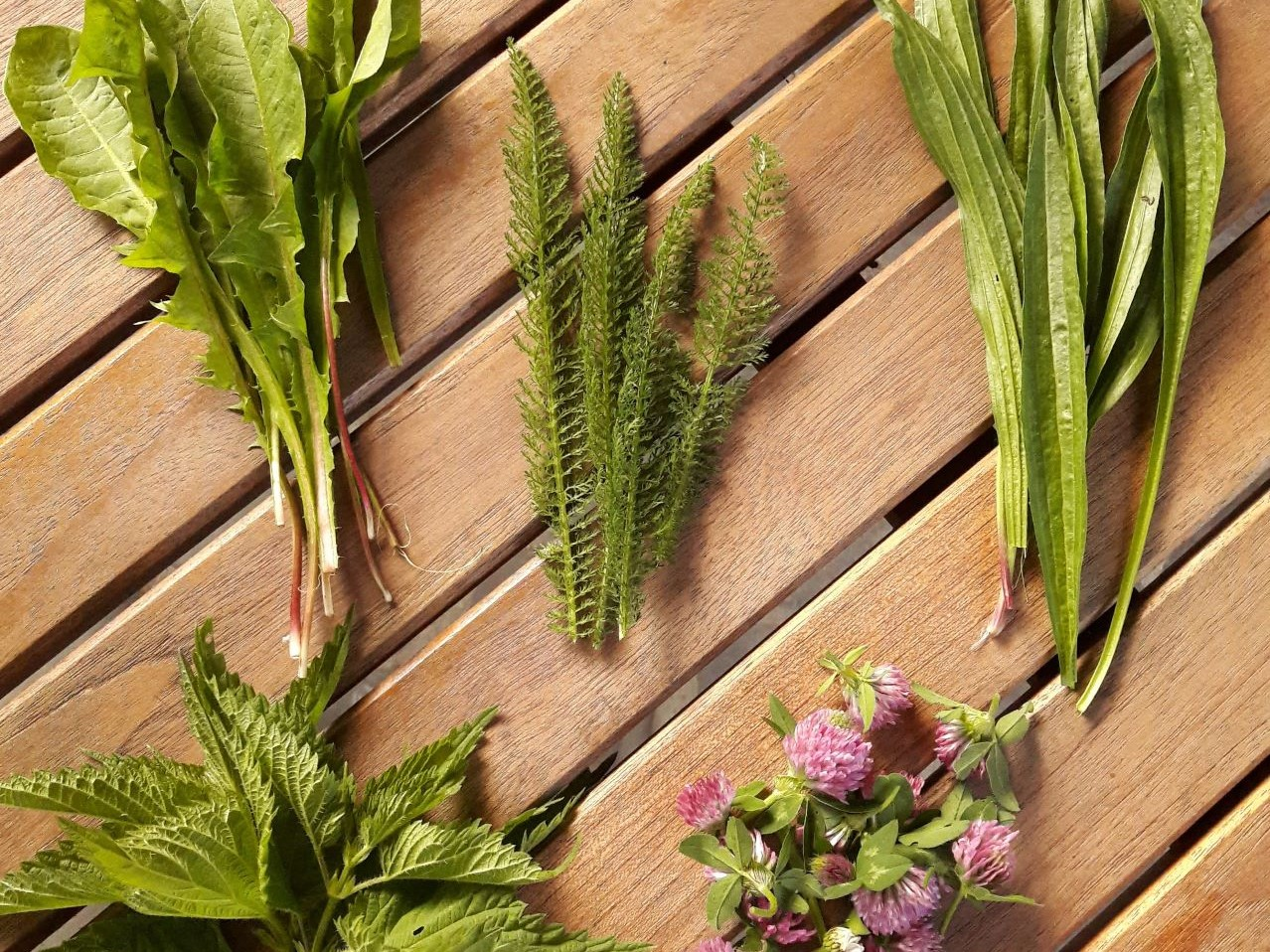12 plante medicinale pentru tratamentul articulațiilor