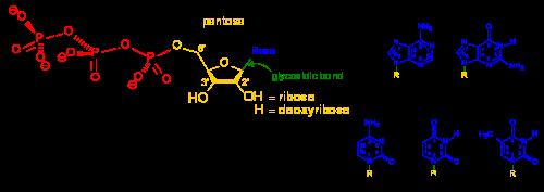 biochimie chimică comună)