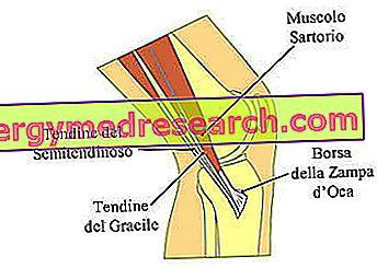 inflamația genunchiului la interior tratament fizioterapeutic al genunchiului