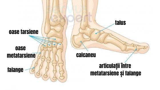 dureri metatarsiene)