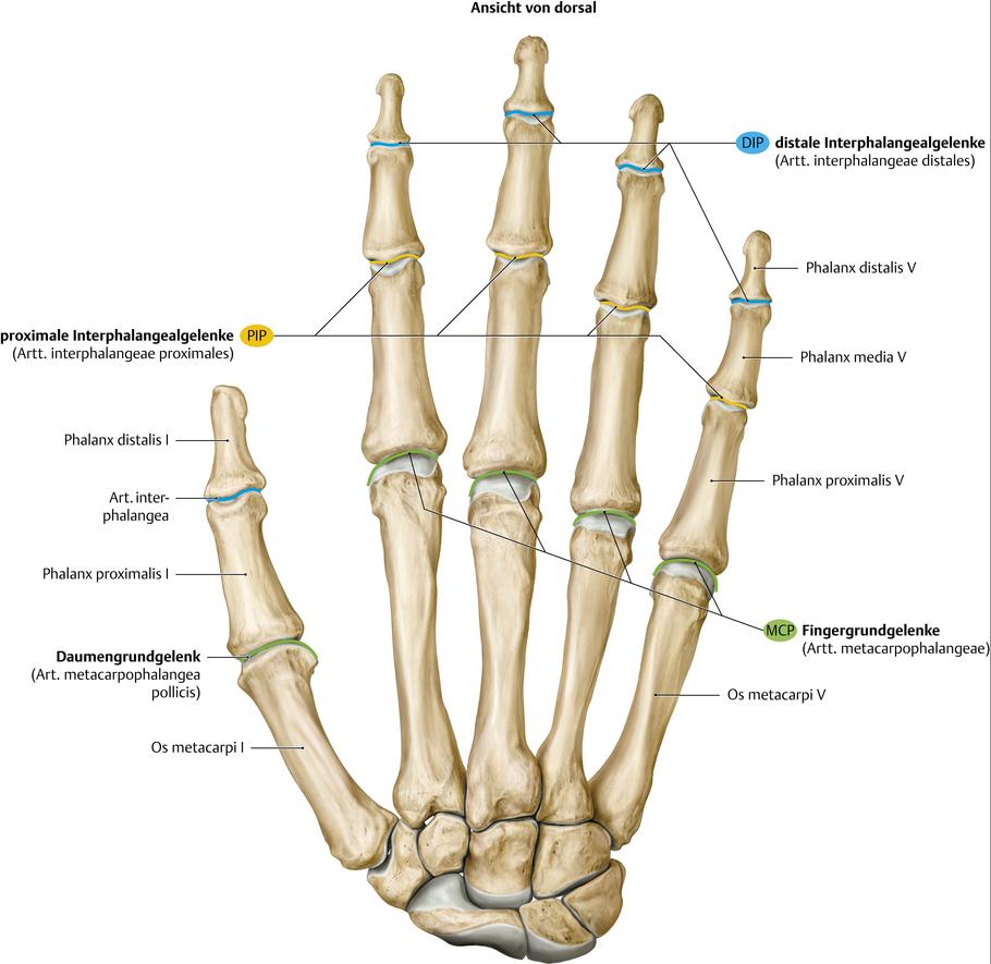 Plângeri de artroză a articulației șoldului, Poate răni articulațiile cauzate de streptococi