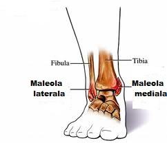 simptome de fractură a gleznei role de leziuni la genunchi