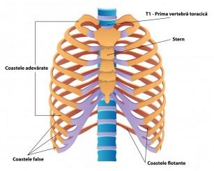 tratamentul artrozei vertebrale a coastei)