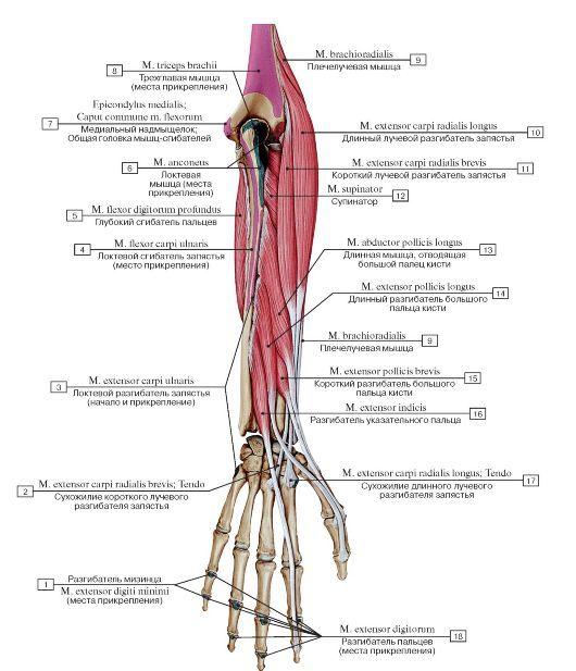 Ruptura de ligamente