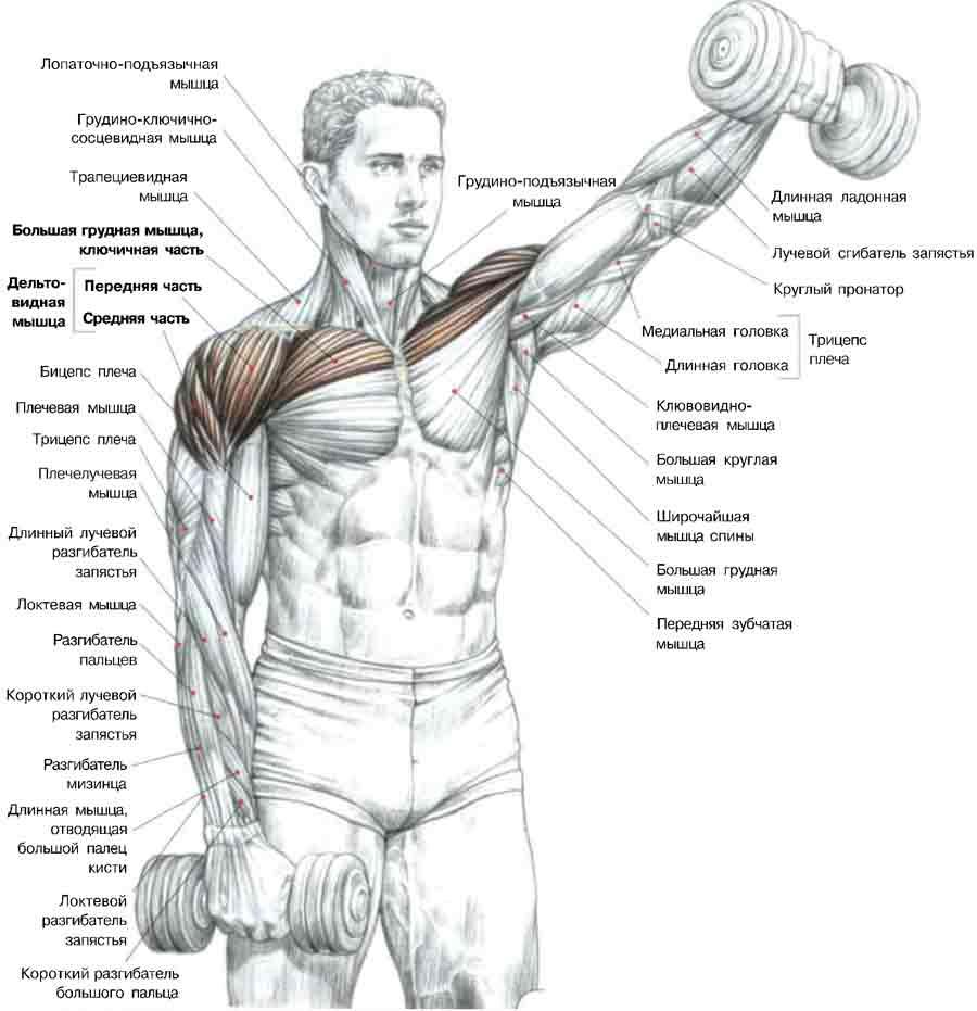 dureri palpitante la nivelul articulațiilor brațelor și picioarelor unde tratează artroza articulației șoldului