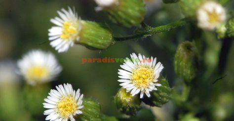 dureri articulare primăvara)