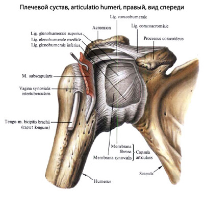 ce medicament blochează articulația umărului