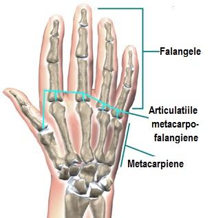 articulațiile interfalangiene ale tratamentului degetelor