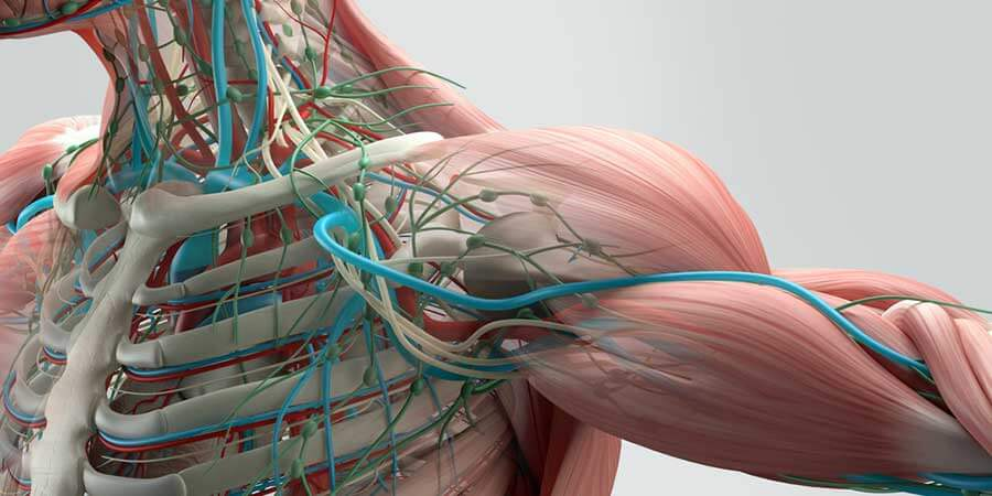 tratamentul osteoporozei articulației umărului)