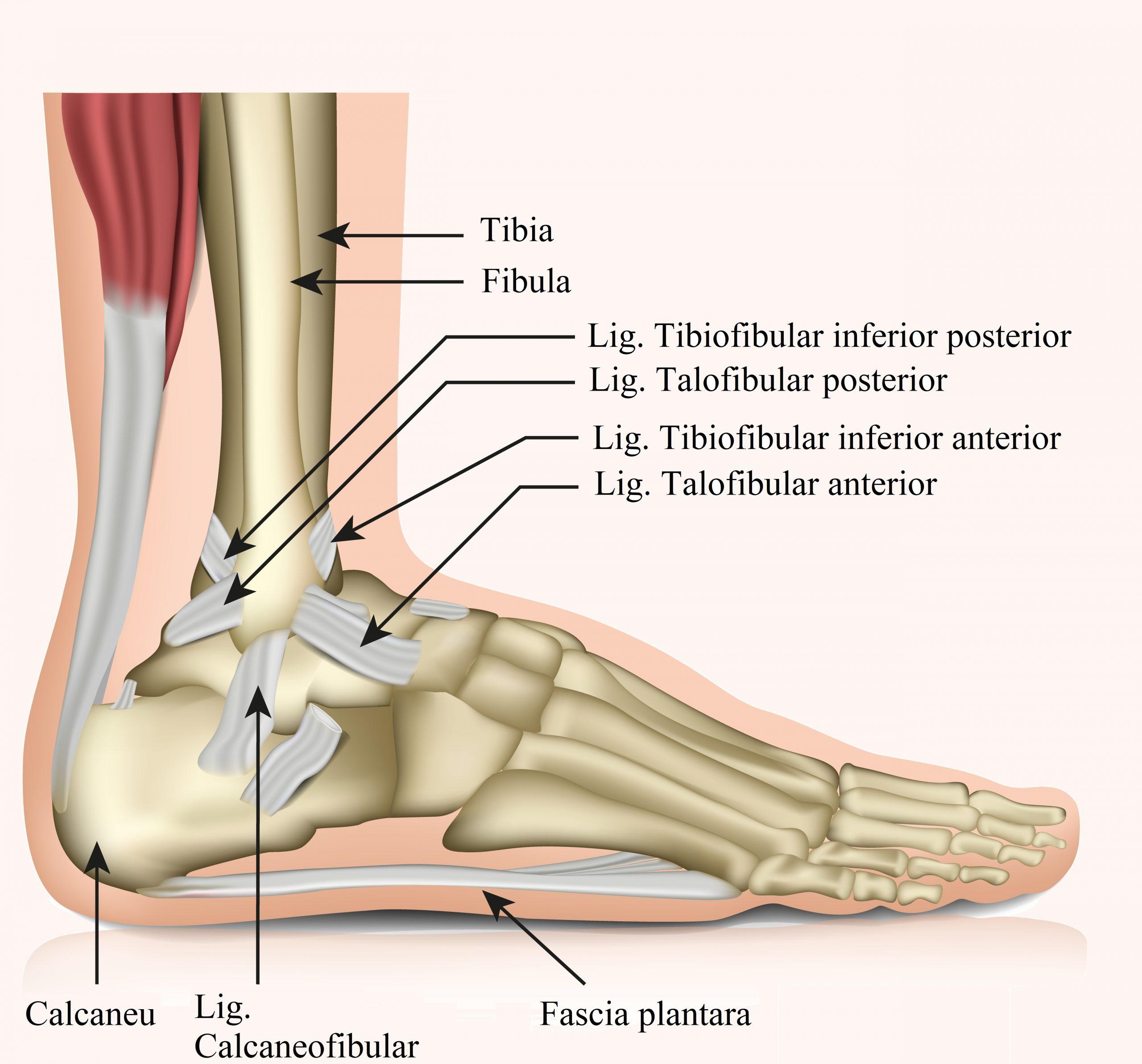 inflamația articulară a piciorului inferior umflături ale gleznei