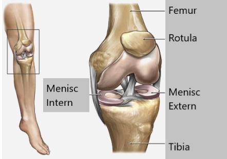 meniscul medicamentelor articulației genunchiului)
