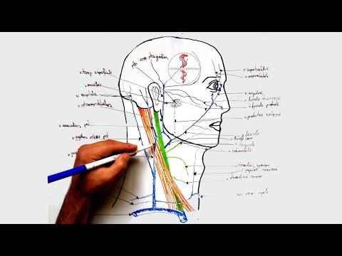 cum să scutiți exacerbarea artrozei articulațiilor)