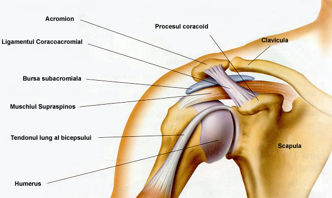 durere în articulații și sub omoplat