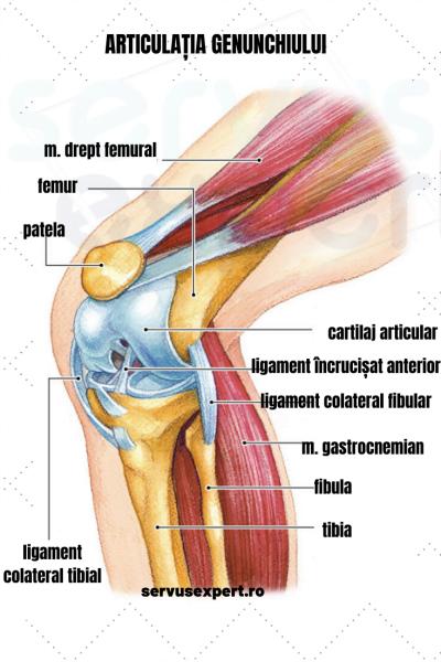 durere severă bruscă la nivelul articulației genunchiului)
