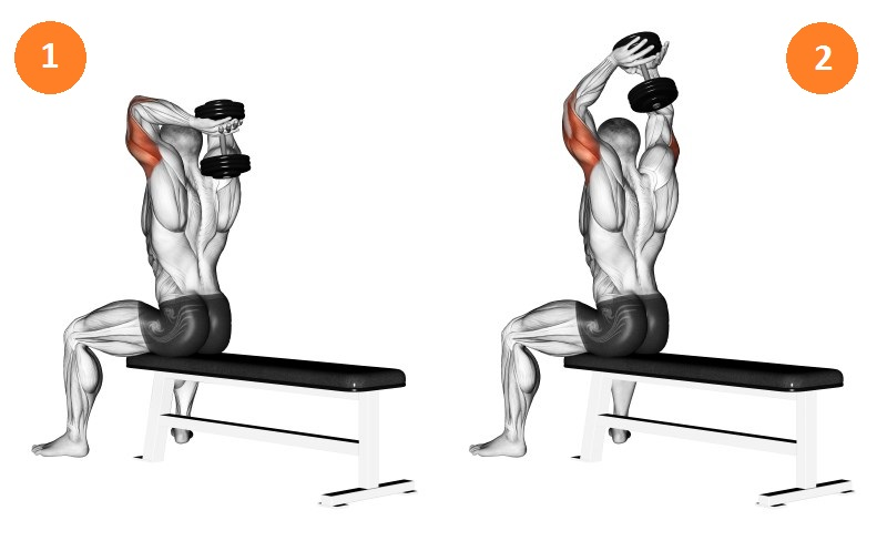 Triceps - unde este. Anatomia mușchilor brațului și cele mai bune exerciții pentru pomparea lor