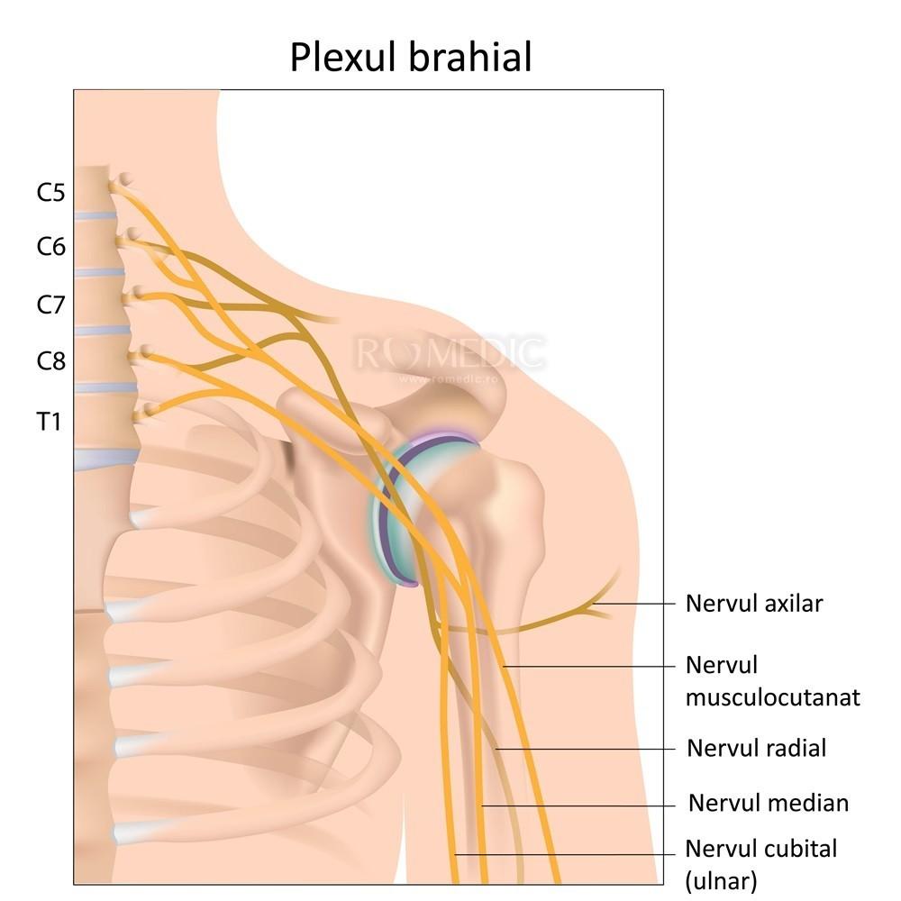 tratamentul nervilor umărului