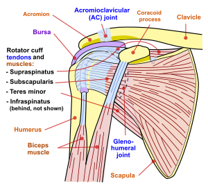 Capsulita retractila (adeziva)