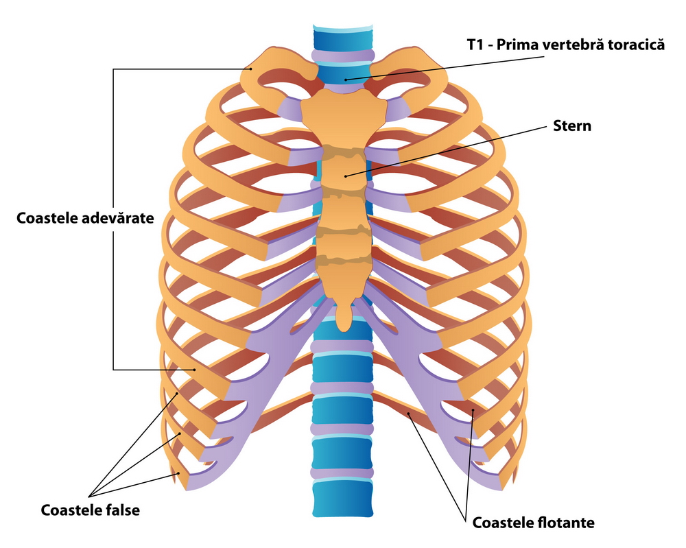 Costocondrita – posibila cauza a durerii in piept - centru-respiro.ro