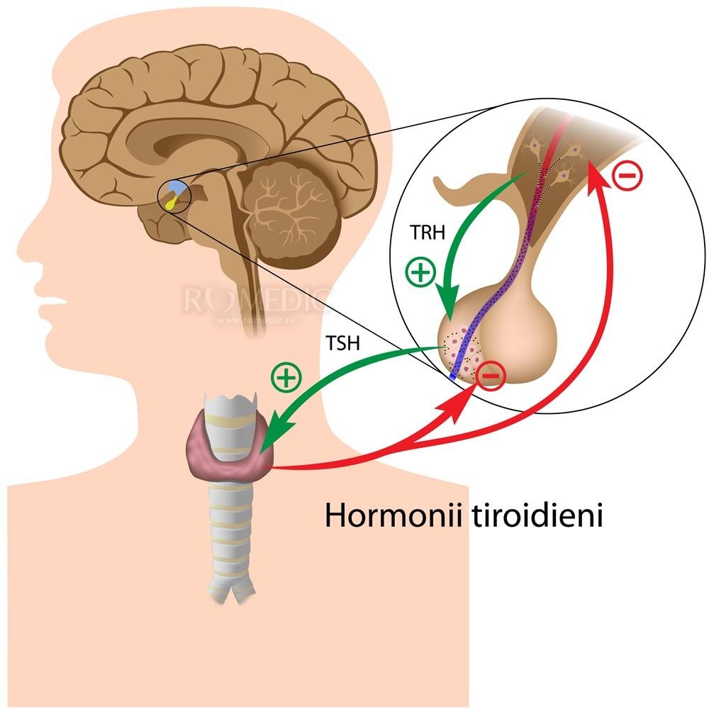 efectul bolii tiroidiene asupra articulațiilor)