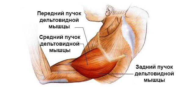 Deteriorarea mușchiului supraspinat al articulației umărului - centru-respiro.ro