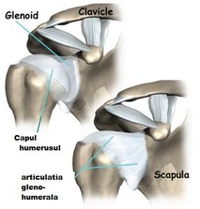 învârti în articulația umărului cât doare