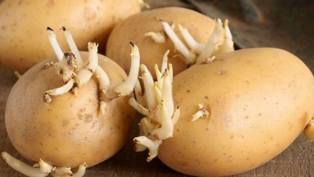 Remedii naturale pentru durerile de artrită, Germeni de cartofi dureri articulare