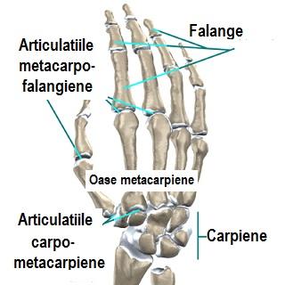 unguent de prescriptie pentru dureri articulare artroza articulațiilor genunchiului cum se tratează