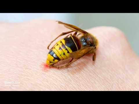 Tratamentul albinelor pentru artroza genunchiului, Cere părerea specialistului!