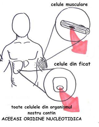 Artroplastia de cot – dr. Mihai Tudor Gavrila