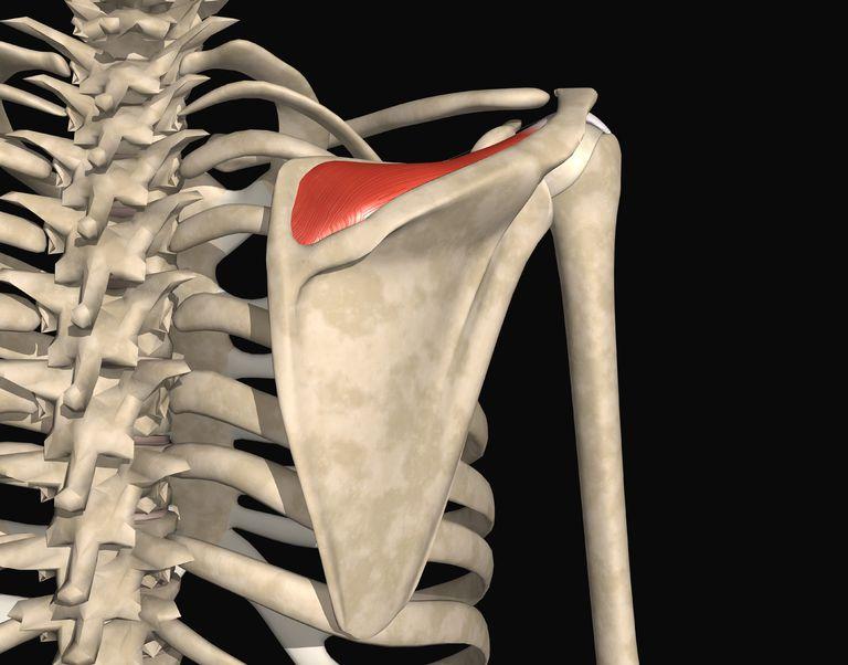ruperea manșetei rotative a tratamentului articulației umărului pastile de osteochondroza unguente vitamine