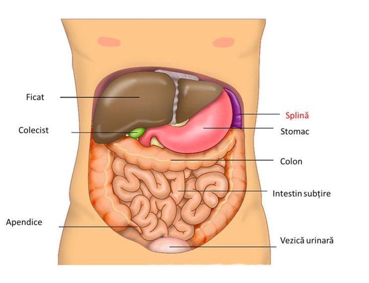 splina a crescut durerea articulară
