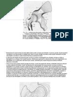 metoda de tratament a articulațiilor conform gerasimov