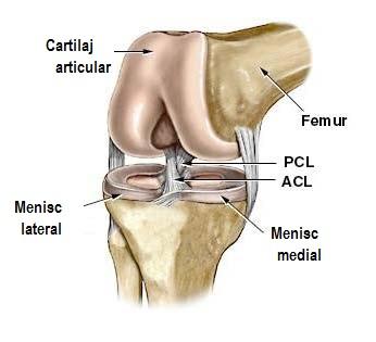 3-4 articulația genunchiului)