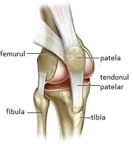 îngustarea spațiului articular al tratamentului articulației genunchiului micoza bolilor articulare