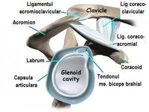articulațiile creează genunchii decât pentru a trata