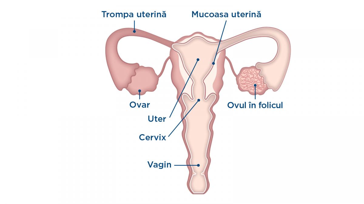 Durerile lombare cauzate de menstruatie