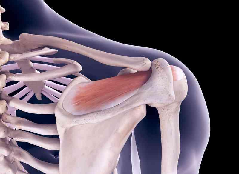 manșeta articulației umărului