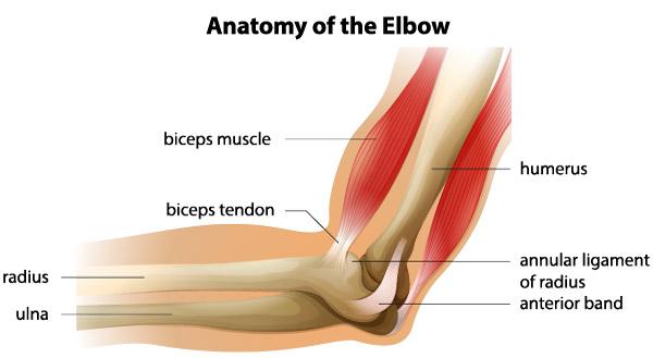 tratamentul rupturii ligamentelor articulației cotului frunza de nuc pentru dureri articulare