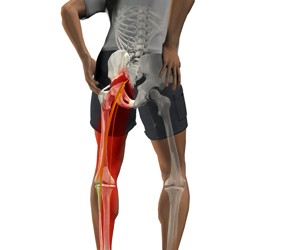 articulația în coapsa dreaptă