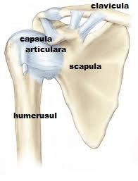 Deteriorarea tendoanelor articulației umărului