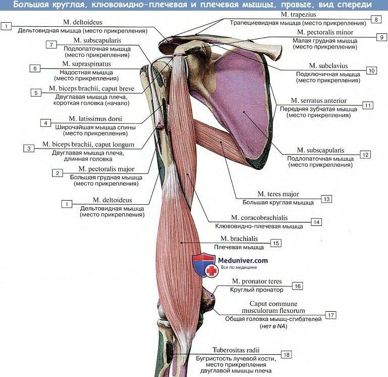 cauzele și tratamentul articulațiilor tratamentul gradului artrozei piciorului