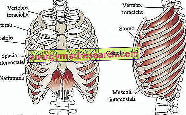deteriorarea cartilajului la tratarea coastelor)