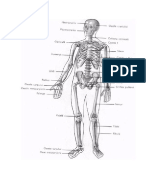 cum să alinați umflarea articulației încheieturii durere de șold clip art