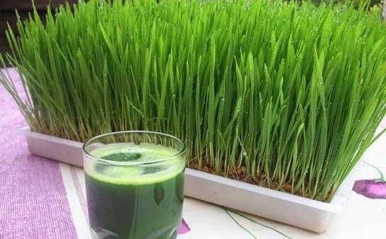 iarba de grâu cu boli articulare)