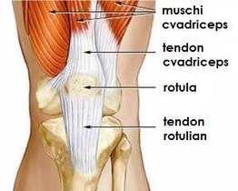 tratamentul tendinozei genunchiului)