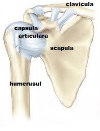 durere sub articulația umărului în braț)