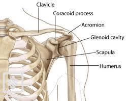 dureri de umăr după fractura de claviculă)