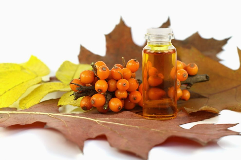 tratarea îmbinărilor cu ulei de cătină)