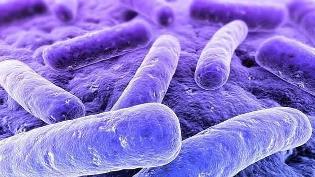 Infecţia cu Klebsiella: simptome, cauze, tratament, prevenţie - CSID: Ce se întâmplă Doctore?